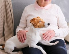 emotional support dog sitting on older woman's lap